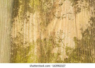 Wood texture background pattern with moss