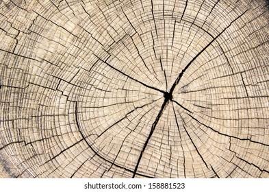 wood texture cut tree trunk