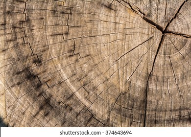 Wood texture of cut tree trunk, Tree-rings, close-up