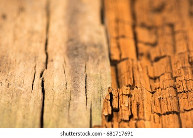 Wood Texture,  Desk in Perspective Close Up, Striped Timber, Old Table or Floor Board. Selective focus