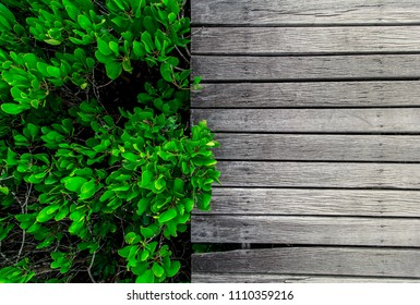 wood texture and leaves background