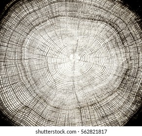 Wood texture with natural patterns and rings from a large tree stump. Dark sepia toned background with empty space.