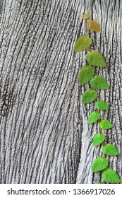 Wood texture nature background