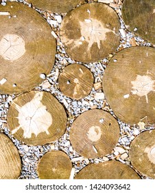 Wood texture with round stumps. Wooden pattern with round stumps. Teak Wood Stumps.