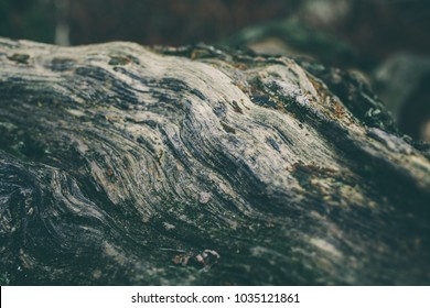 Wood texture of tree trunk closeup. Rough wood texture and background for design. Old vintage tree trunk background. Weathered wood. Natural and organic background.