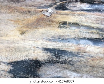 Wood texture,Bark texture for the background or text, Black and white style