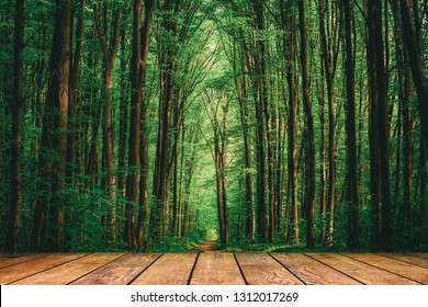 wood textured backgrounds in a room interior on the forest backgrounds