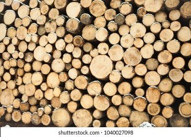 A lot of wood. They are ready for the industry. They will be made natural furniture