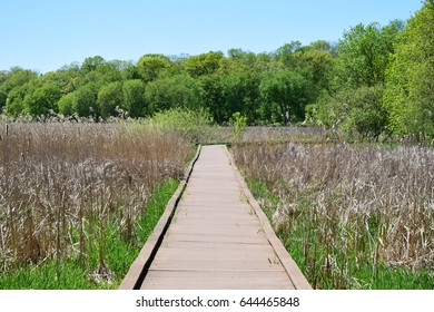 Wood Trail Through the Swampy Nature Landscape
