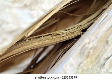 Wood, Tree bark, cortex