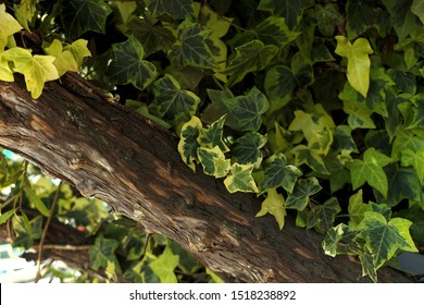 Wood tree branch and leaves background
