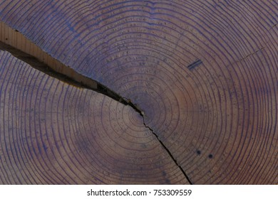 wood, tree, circle, growth,  age, years, old, life, aging, closeup, abstract
