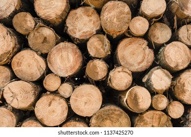 Wood tree logs cut for lumber industry. Wooden trunk pile, timber stack texture background.