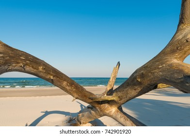 Wood tree on the beach