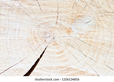 Wood tree ring background texture, flat area with circles and one deep cracks, brown colors, tree cut