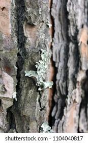 Wood Tree Texture