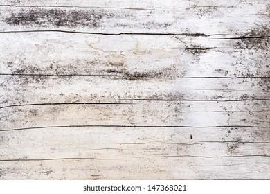Wood tree texture pattern