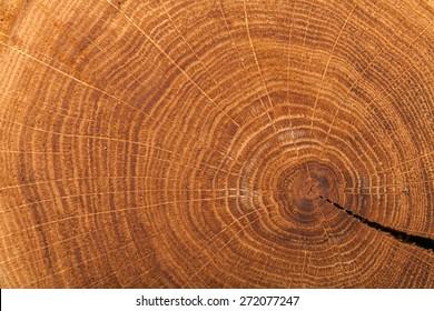 Wood, Tree, Textured.