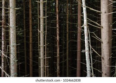 wood / trees .