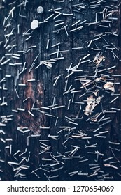 Wood utility pole with many staples.