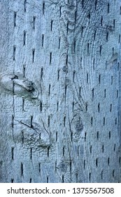 Wood Utility Pole in Silver Gray Rough Texture Pattern With Knots and Staples