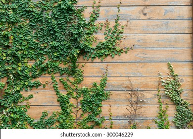 Wood wall with Coat buttons