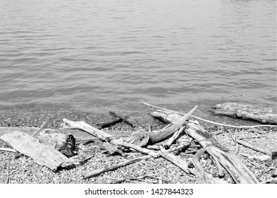 Wood washed up from the water rests on the pebble beach Flotsam and jetsam haphazardly spread along the beach at waters edge  Wavelets lap at shore Sticks tree trunks dry in the sunlight washed ashore