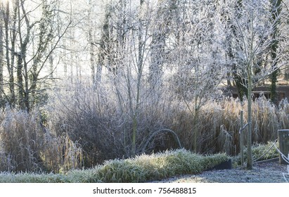 Wood way in hoar frost with fog at winter