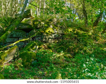 In a woodand in the Derbyshire Dales a jumble of moss covered rocks bars the way forward
