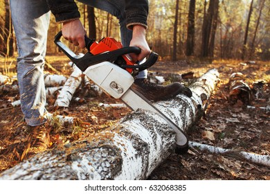 Woodcutter saws a tree in the forest