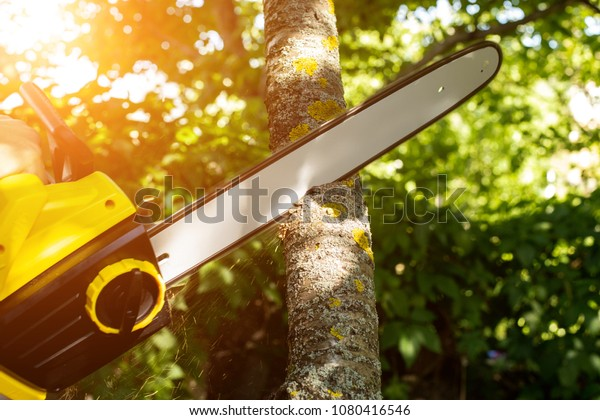 tree cutting Singapore