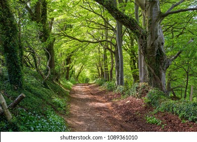 A wooded footpath near Bath, England part of the Fosse Way which is an ancient Roman Road.