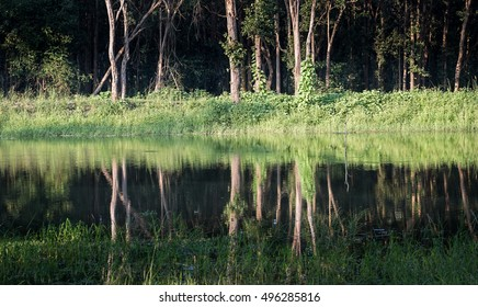 Wooded forest and lake