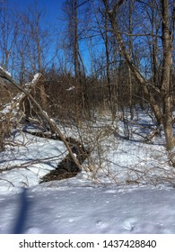 Wooded landscape with snow in New England