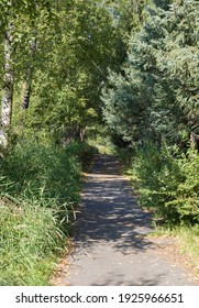 A wooded path through Earthquake Park, near the Tony Knowles Coastal trail, surrounded by lush green trees and branches in downtown Anchorage, Alaska; as seen on a sunny summer day in 2019.