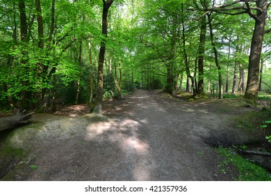 A wooded Pathway in Horsham ,West Sussex