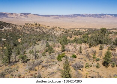 Wooded slope leads down to the Mojave Desert in Southern California.