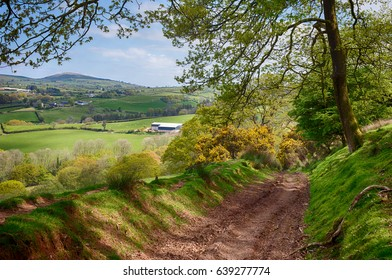 A Wooded Track on the Beacons Way Through Beautiful Countryside in Carmarthenshire, Wales, UK