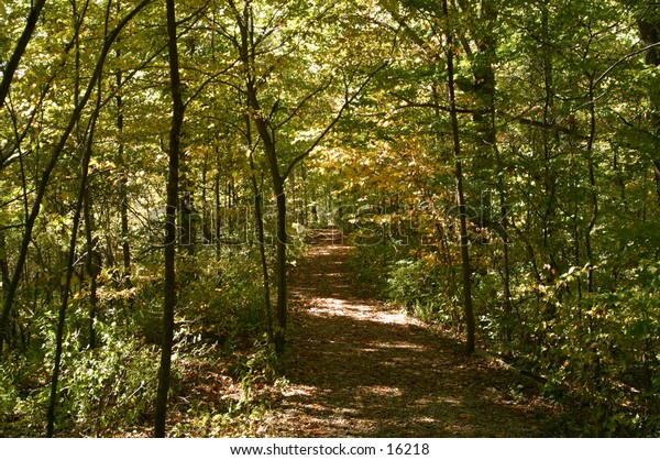 a wooded trail through autumn leaves