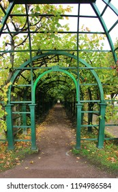 Wooden arbor with branches of grapes in the park
