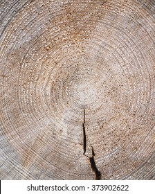 Wooden background. Cross cut of a tree trunk. Close up