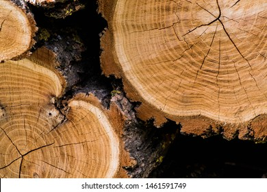 Wooden background. Macro wood cross section. Closeup of round slice of tree with annual rings and cracks. Natural organic texture. Flat surface. Close view of brown tree log cut end. Round cut tree.