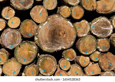 Wooden Background: Pile of Softwood Tree Trunks Closeup View
