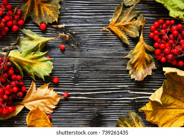 Wooden backgrounds with dry leaves and ashberry and copy space
