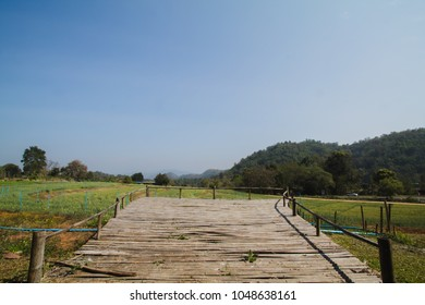A wooden balcony was built over the fields where rice was planted in the form of rice terraces to admire the beauty of barley and wheat fields in the summer of Thailand. Sufficiency Economy Concept