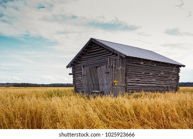 The wooden barn house stands in the middle of the autumn fields in the Northern Finland. The fields are ready for harvesting.