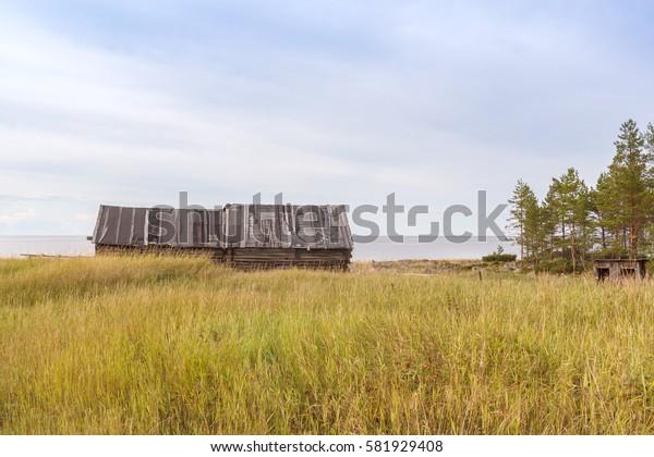 Wooden barn in Pine desert on the Big Solovetsky Island