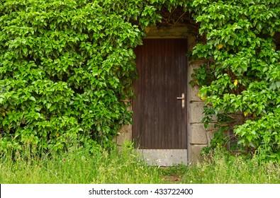 wooden basement door overgrown green leaves