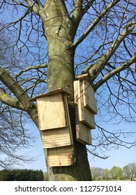 Wooden bat shelters on a tree trunk in the UK