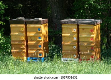 Wooden bee hives. Hives with bees.